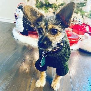 Knit Turtleneck for Small Dogs